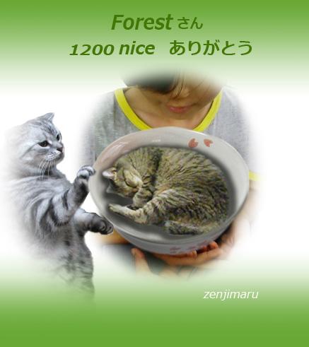 1200nice_1.jpg